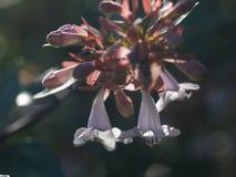 Wild blommor sätter in Fotografering för Bildbyråer