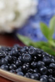 Wild blueberries Stock Photo