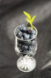 Wild blueberries with fresh green leaves in small wineglass on b Stock Photos