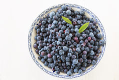 Wild Blueberries Stock Image