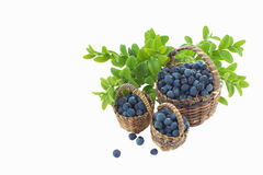 Wild blueberries in three wooden baskets on white Stock Photography
