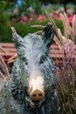 Wild boar bronze statue, Butchart Gardens, Victoria, Canada Stock Images