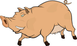 Wild boar .Cartoon Royalty Free Stock Photo