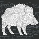 Wild boar in black and white style Royalty Free Stock Photography