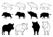 Wild Boar elements. Set of Wild Boar elements, line arts and silhouettes, for Asian new year design vector illustration