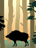 Wild boar in the forest. Vector illustration of wild boar Royalty Free Stock Image