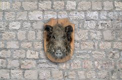 Wild boar head Royalty Free Stock Image