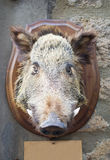 Wild boar head Stock Photos