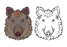 Wild boar head drawing set. With and without colors, Chinese zodiac vector illustration