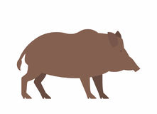 Wild boar. Illustration on white background Royalty Free Stock Image