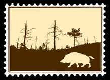 Wild boar on postage stamps Royalty Free Stock Photo