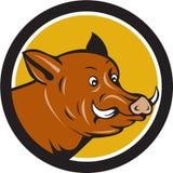 Wild Boar Razorback Head Startled Circle Cartoon Royalty Free Stock Image