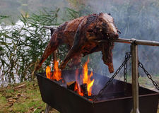 Wild boar on spit Royalty Free Stock Photo