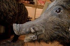 Wild Boar. A wild boar. Stuffed animal Stock Image