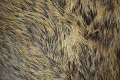 Wild boar texture Stock Image