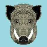 Wild boar. Vector illustration hand drawn Stock Photos