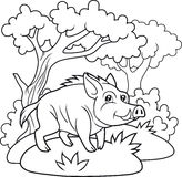 Wild boar walking in the woods Stock Images
