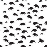 Wild boar or warthog seamless pattern Stock Images