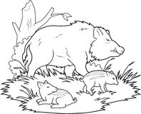 Wild boars family  Stock Photo