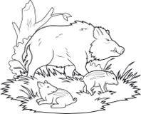 Wild boars family vector illustration