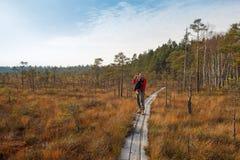 Wild bog in autumn Stock Images