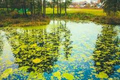 Wild Bog Swamp. Royalty Free Stock Photos