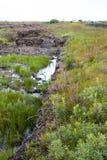 Wild bogland landscape Royalty Free Stock Photos