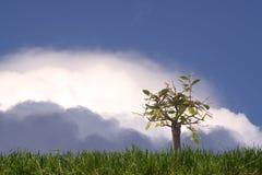 WILD BONSAI. Bonsai in the open air with an iimpressive sky Stock Image
