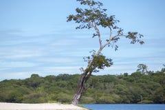 Wild boom en zandstrand op de Rivier van Amazonië in Manaus, Brazilië Royalty-vrije Stock Foto's