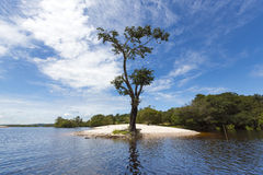 Wild boom en zandstrand op de Rivier van Amazonië in Manaus, Brazilië Stock Afbeeldingen