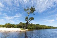 Wild boom en zandstrand op de Rivier van Amazonië in Manaus, Brazilië Stock Foto's
