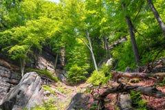 Wild bos, Boheems Zwitserland, Tsjechische Republiek stock afbeeldingen