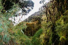Wild bos op Inca Trail aan Machu Picchu peru 3d zeer mooie driedimensionele illustratie, cijfer Geen mensen Royalty-vrije Stock Foto's