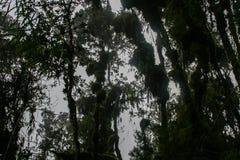 Wild bos op Inca Trail aan Machu Picchu peru 3d zeer mooie driedimensionele illustratie, cijfer Geen mensen Royalty-vrije Stock Fotografie