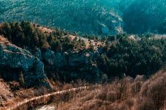Wild Bos van Suncuiux in Roemenië stock afbeeldingen