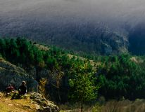 Wild Bos van Suncuiux in Roemenië royalty-vrije stock afbeelding