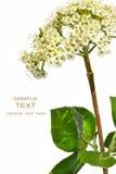Wild botanical flower Royalty Free Stock Images