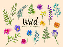 Wild Botanical Plants and Flowers Stock Photo