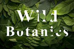 Wild botanics concept of wild green jungle foliage. Top view of creative layout made out of wild forest leaves. Flat lay foliage. wild botanics concept royalty free stock images