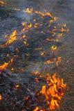 wild brand Fotografering för Bildbyråer