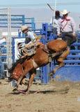 Wild Bronc Rider Stock Image
