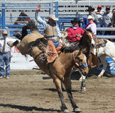 Wild Bronc Rider Royalty Free Stock Photo