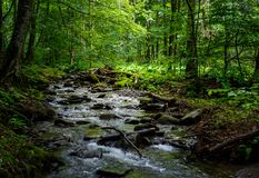 Wild brook in the dark forest. Lovely and fresh nature scenery in summer time Stock Images