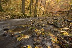 Wild brook in a deep gorge. A view over a shallow brook in a deep gorge in autumn. Nature reserve Stock Images