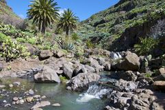 Wild brook in the mountains on La Gomera Royalty Free Stock Photos