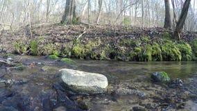 Wild brook water flow and blue hepatica flowers. 4K stock video footage