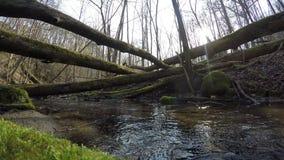 Wild brook water flow and mossy fallen tree trunks. 4K stock footage