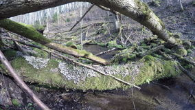 Wild brook water flow and mossy fallen tree trunks. 4K stock video