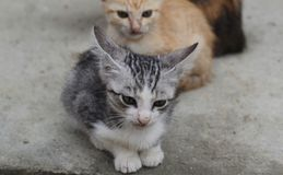 Wild brothers kittents stock image
