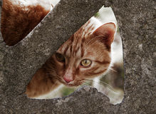 Wild brown cat Stock Images